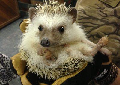 kulaqua-christian-retreat-center-in-florida-zoo-hedgehog