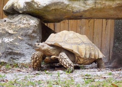 kulaqua tortise christian retreat center zoo